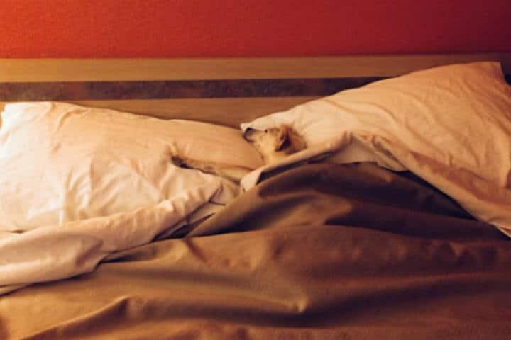 Cadenas de Hoteles Petfriendly Foto Motel 6 a