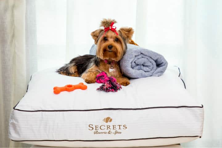 Cadenas de Hoteles Pet friendly Foto Secrets Resorts