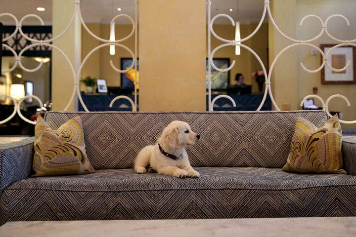 Cadenas de Hoteles Pet friendly Kimpton Monaco Seattle