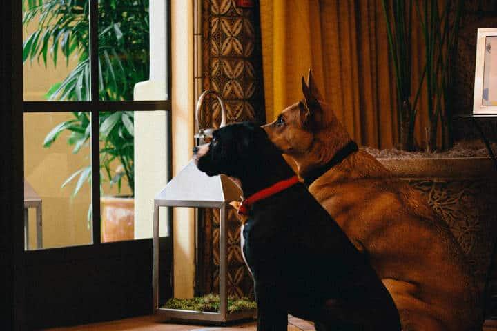 Cadenas de Hoteles Petfriendly Kimpton Palomar San Diego 1
