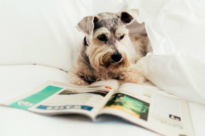 Cadenas de Hoteles Petfriendly Loews 3