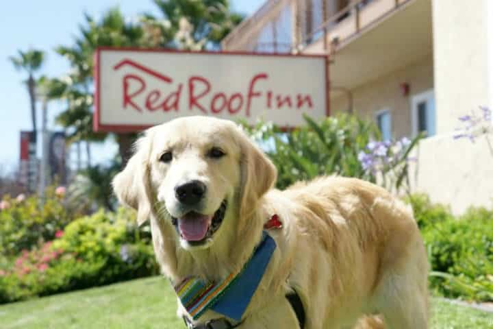 Cadenas de Hoteles Pet friendly Red Roof Inn