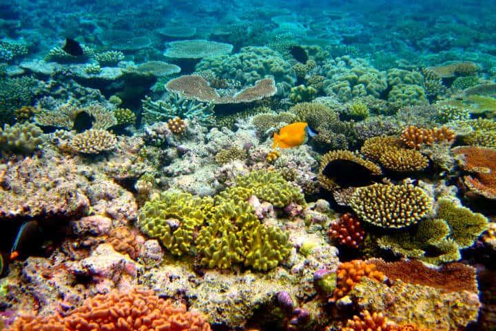 Crucero alrededor del mundo Gran Barrera Coral Foto Kyle taylor