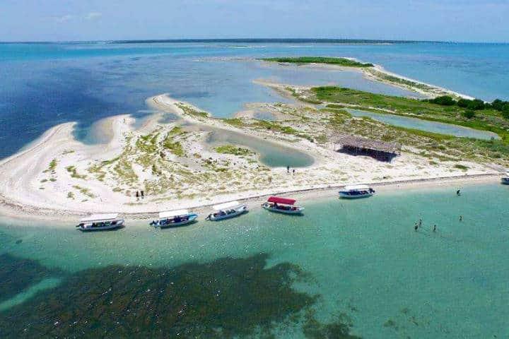 Delfines Isla Aguada Campeche Foto Don Pasita 11