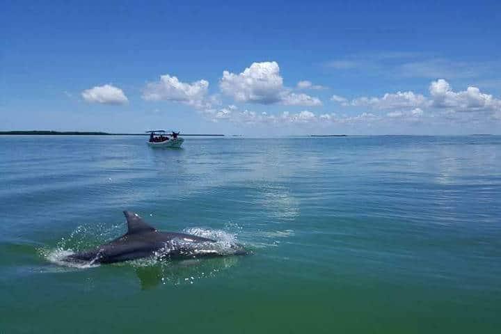 Delfines Isla Aguada Campeche Foto Don Pasita 16