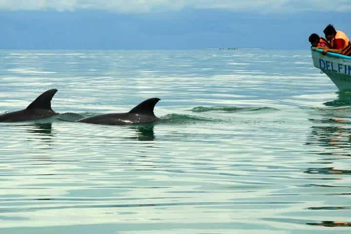 Delfines Isla Aguada Campeche Foto Don Pasita 18