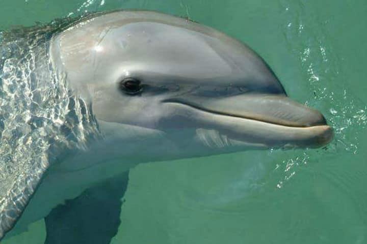 Delfines Isla Aguada Campeche Foto Don Pasita 19