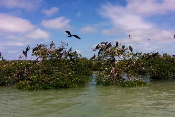 Isla Aguada Campeche Foto el Souvenir 5
