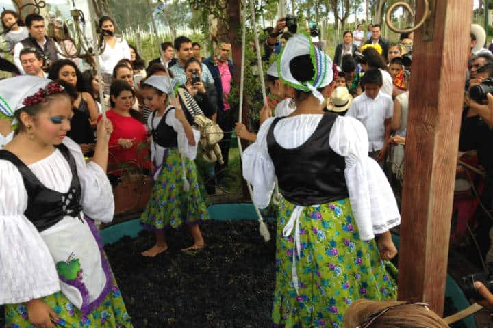 Vendimias Guanajuato Foto Migue Velazquez 3