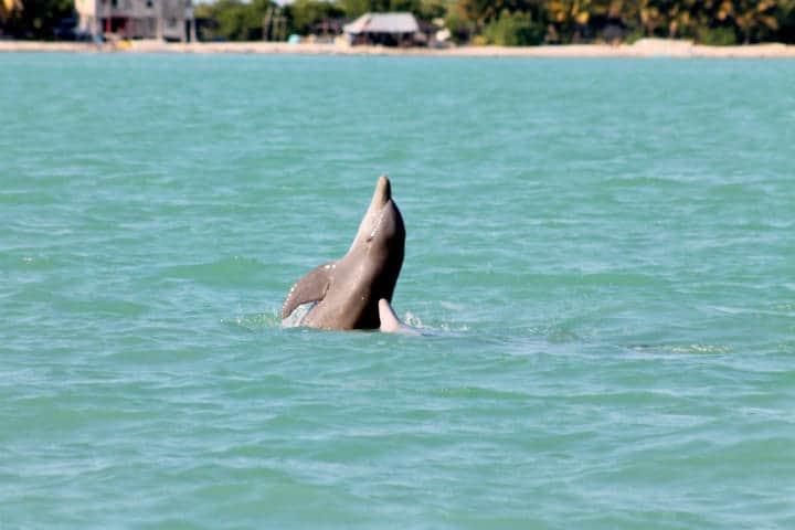 isla aguada Campeche Foto 03