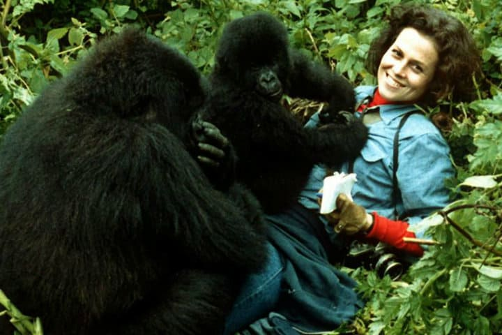 Dian Fossey. Foto. Her Moments. 2