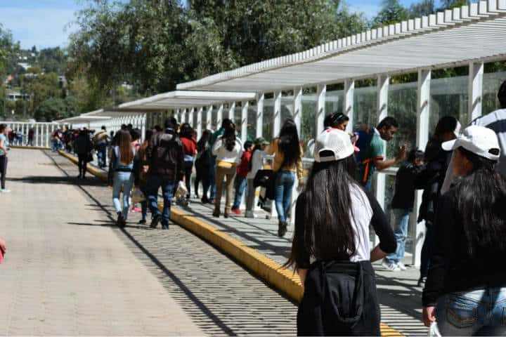 Leones blancos Zoológico Tlaxcala 8
