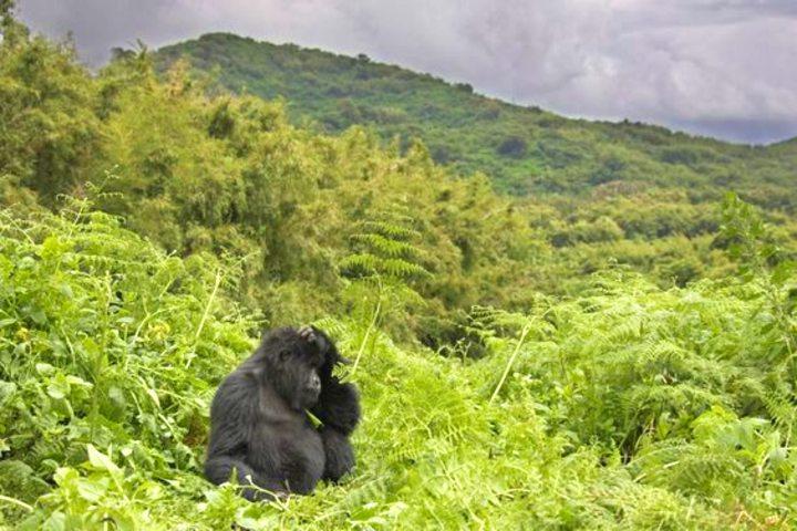 Montaña Virunga. Foto Treveler.