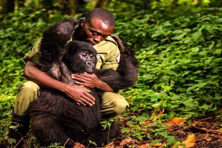 Parque de Gorilas en Ruanda. Foto Genial.