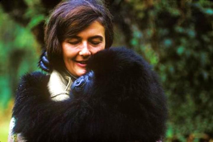 Parque de gorilas en Ruanda. Foto Pinterest.