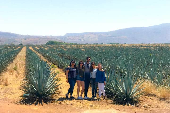 Agaves. Foto:PM