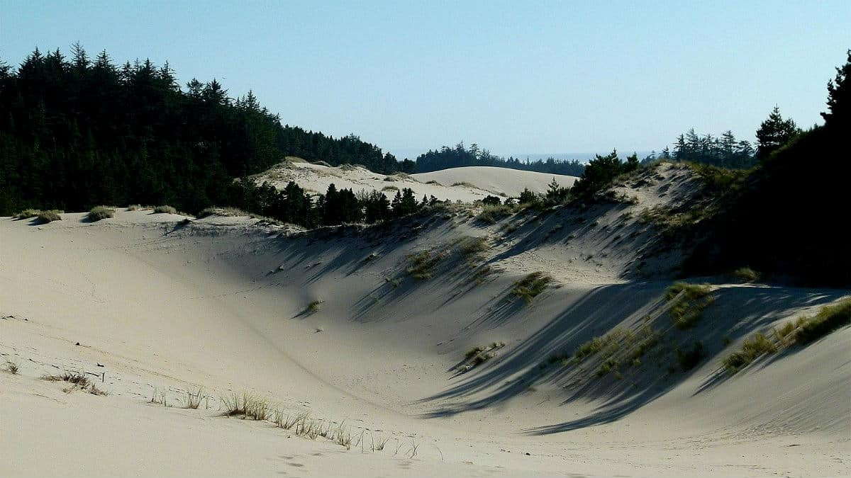 Portada.Dunas de arena en Oregon.Foto.Art Tower