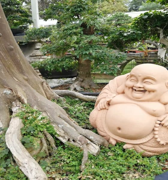 museo del bonsai fortin veracruz