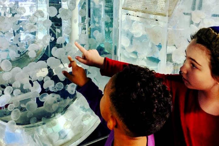 Acuario Newport Oregón Foto Newport Aquarium 14