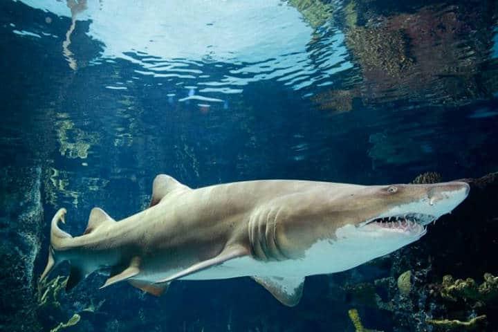 Acuario Newport Oregón Foto Newport Aquarium 6