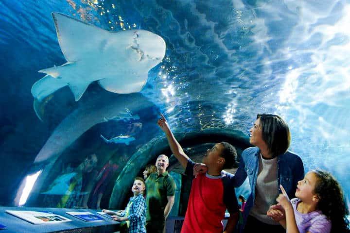 Acuario Newport Oregón Foto Newport Aquarium 9