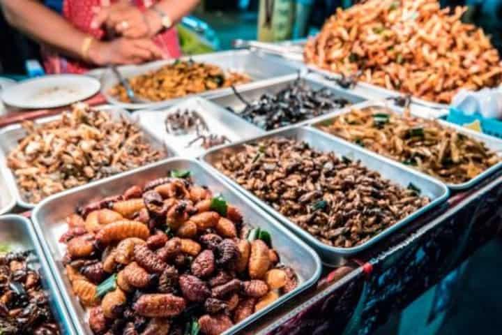 Insectos varios. Foto: W Consultas