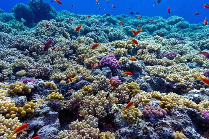 Arrecifes de coral. foto: ALEF