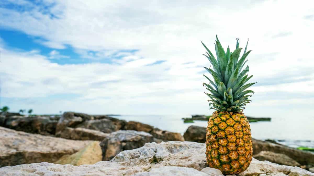 Donde comer en Akumal, Quintana Roo. Foto. Pineapple Supply Co. 5