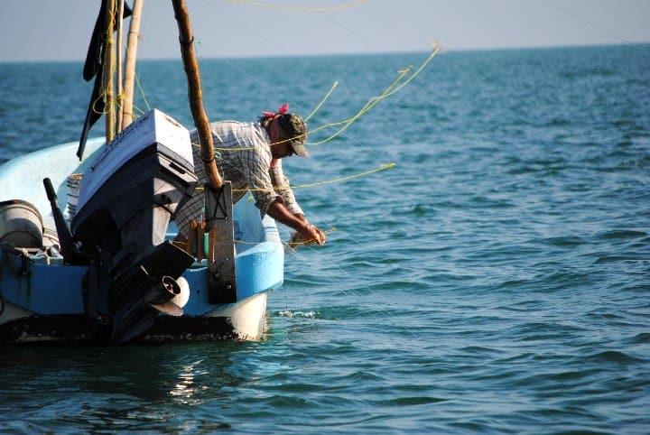 Pescado-fresco-y-de-calidad-Foto-Punto-Medio-2