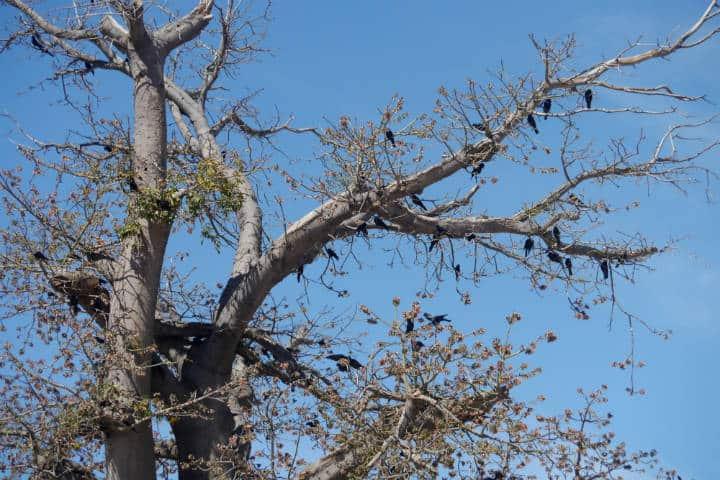 Cocorit Pueblo de las Aves Foto El Souvenir 119
