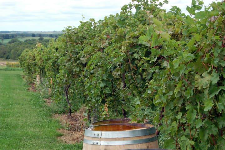 galena cellars vineyard