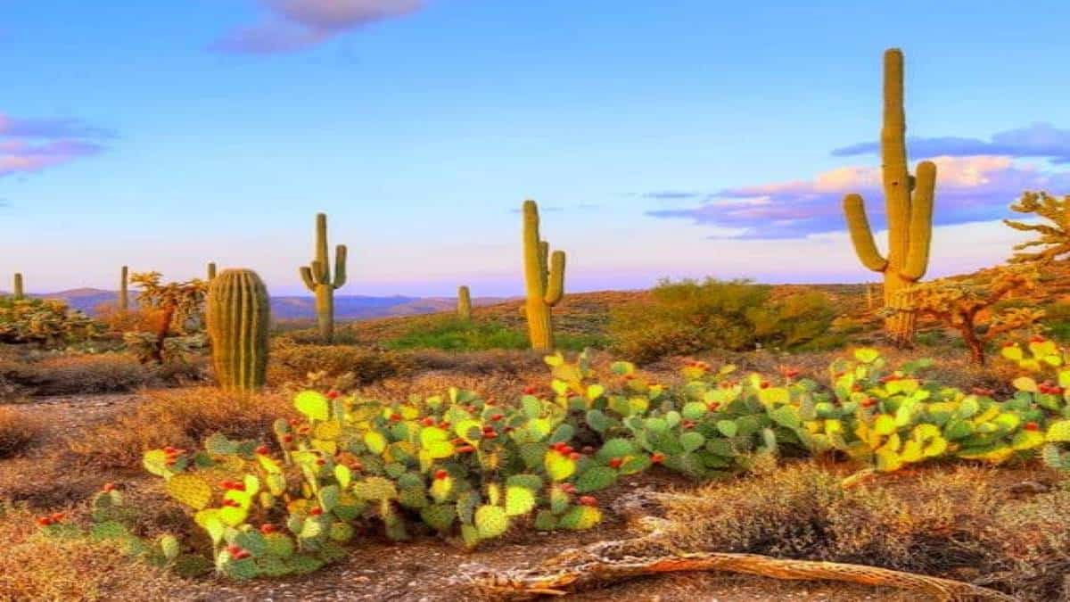 desierto-de-sonora-foto-de-anton-foltin2-560×600