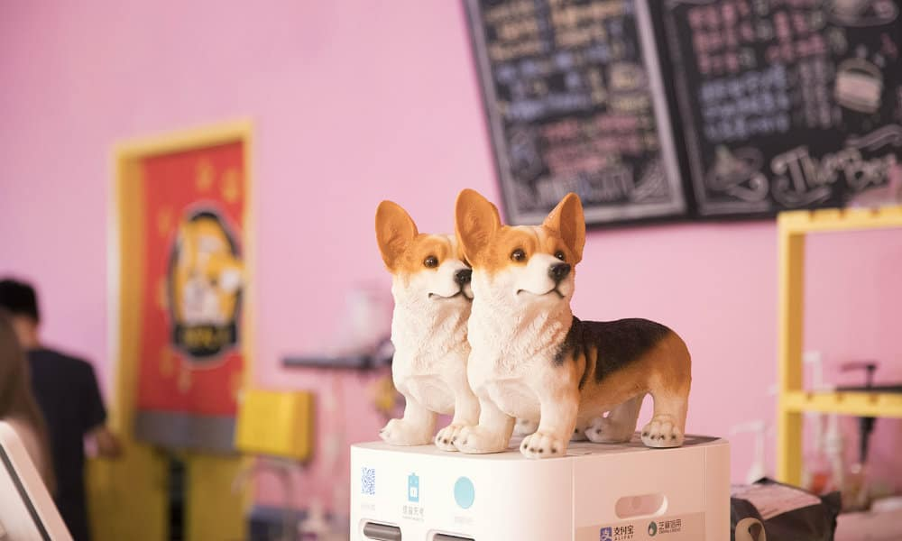 hello corgi cafe