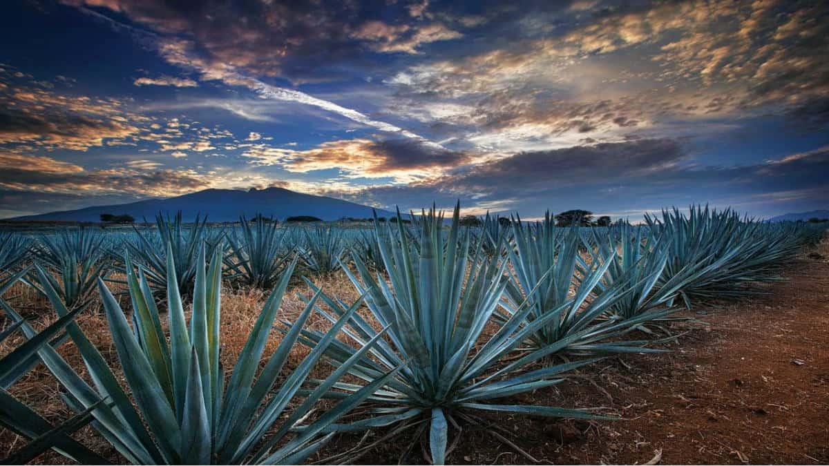 Fiestas y ferias de Tequila.