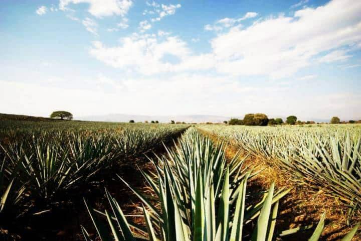 Ferias y clima de Tequila. Foto El Souvenir