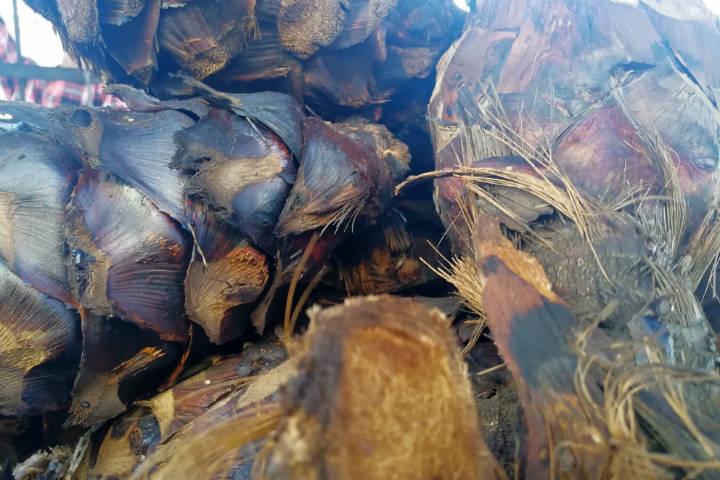 El Bacanora Sonora Foto El Souvenir 12