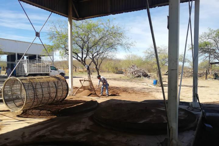 El Bacanora Sonora Foto El Souvenir 13