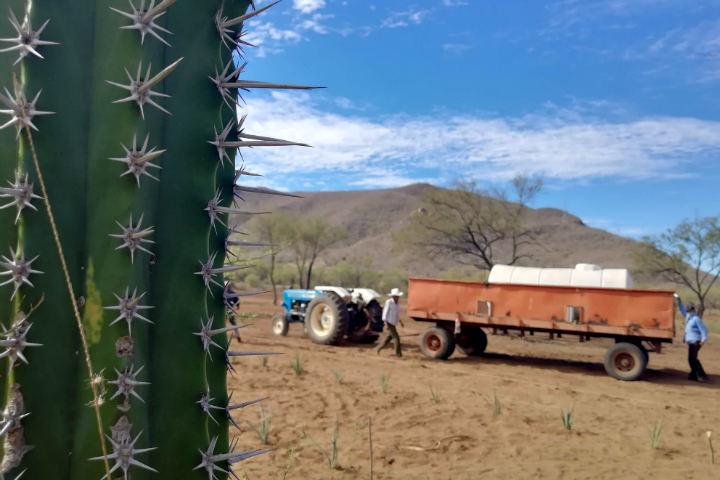 El Bacanora Sonora Foto El Souvenir 3