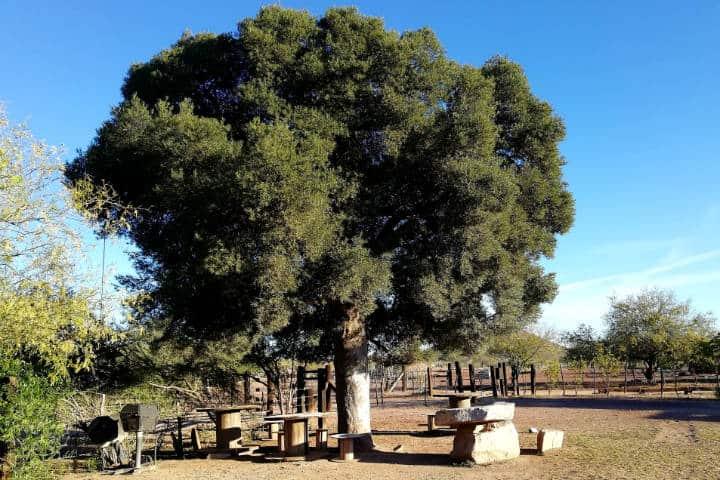 Masiaca comunidad Mayo Foto El Souvenir 1