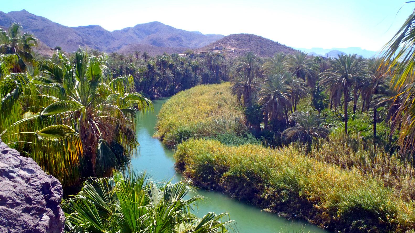 oasis de mulege