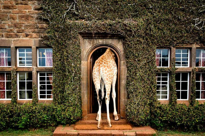 Giraffe Manor. Foto DESTINOS EXPERIENCIALES.