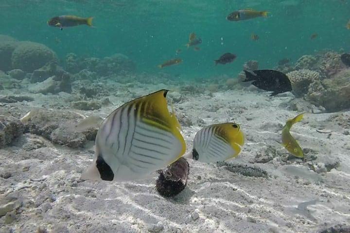 En las islas Cook son conocidas por su diversidad de fauna marina FotoViaje por libre