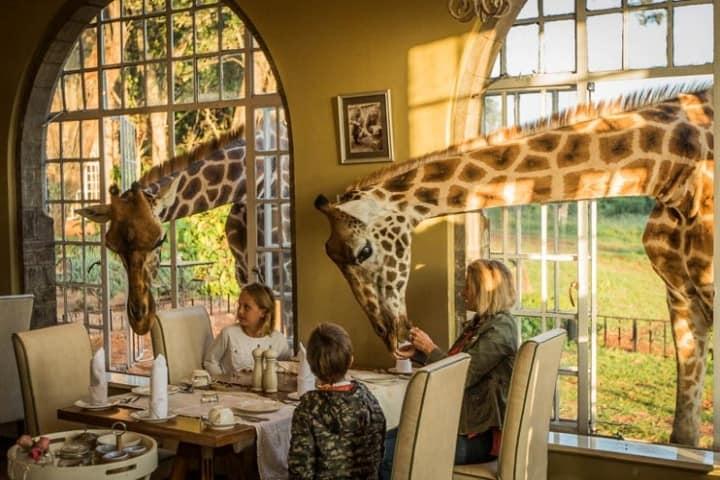 Giraffe Manor es la experiencia que mezcla la más alta calidad de hospedaje con lo más silvestre de África Foto: The Safari Collection