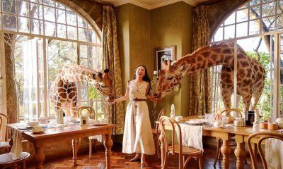 Giraffe Manor es un paraíso tanto para viajeros como para las jirafas que ahí habitan Foto: Big Seven Travel