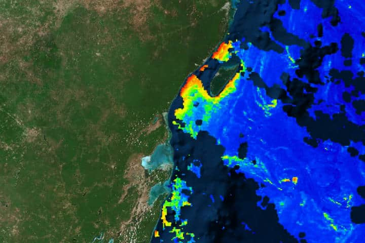 Sargazo Caribe Mexicano Foto Red de Monitoreo CUN 5