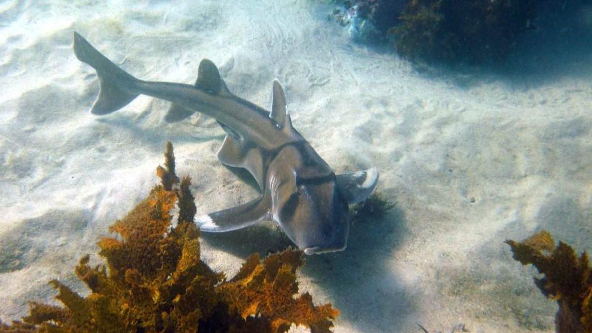 cueva-tiburones-dormidos-1