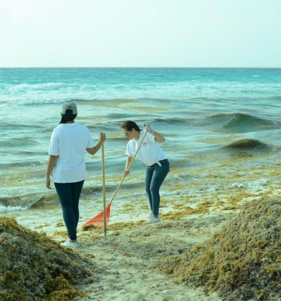 portada Sargazo Caribe Mexicano Foto Caribe Empresarial 1