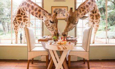 Resorts exóticos, Giraffe Manor, Foto. Globe Trotter Travels