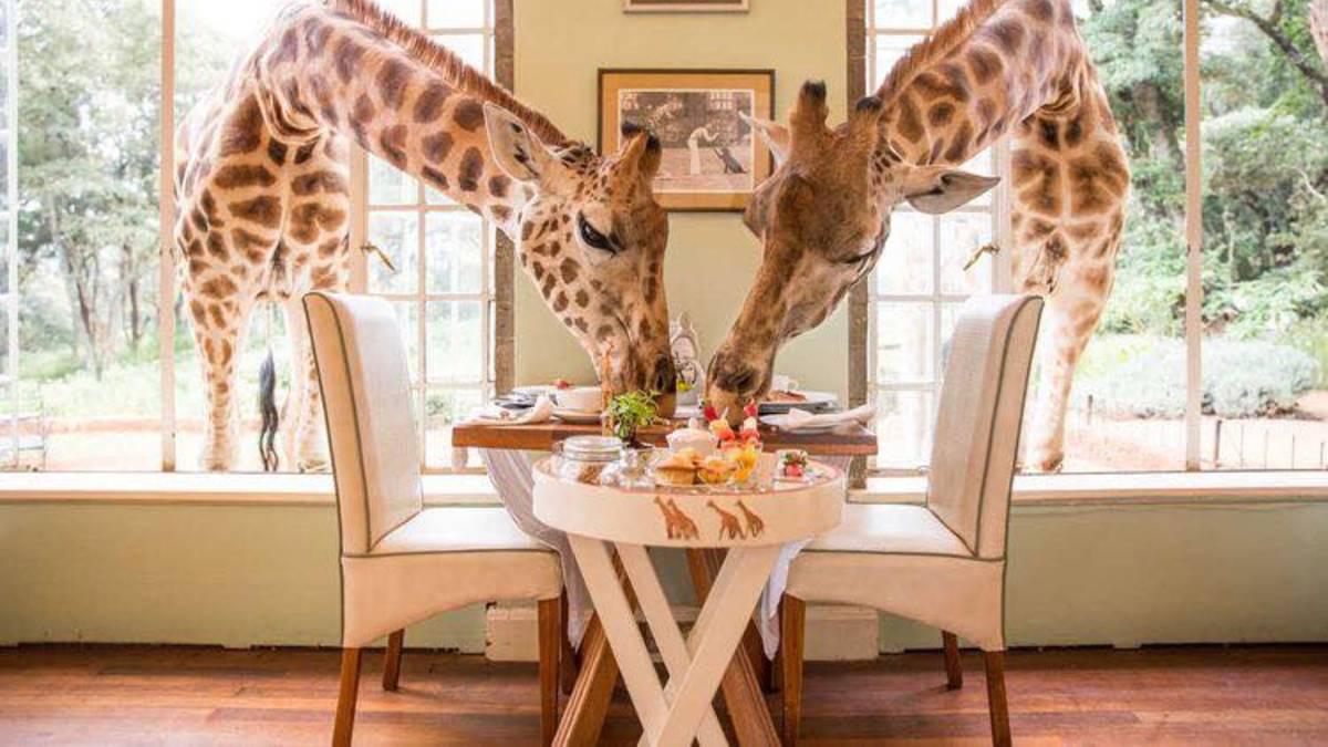 Resorts exóticos, Giraffe Manor, Foto. Globe Trotter Travels(1)