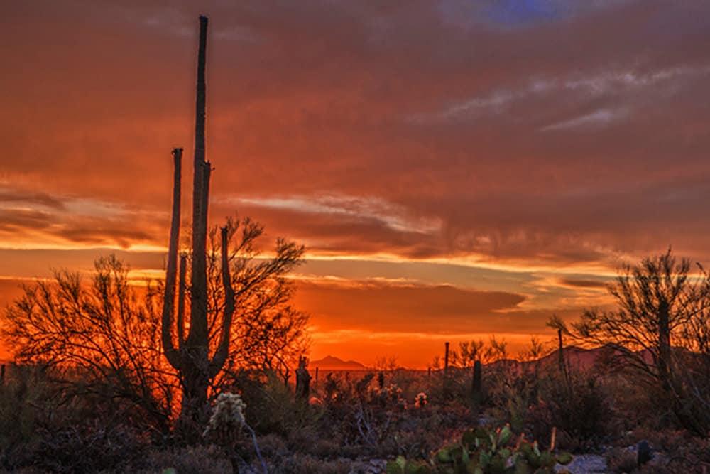 Arizona Foto.César Cantú
